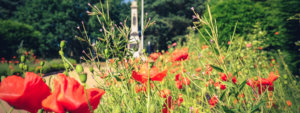 Poppies - The Friends of Hednesford Park